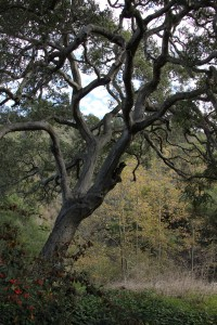 oak-tree-and-dense-vegetation