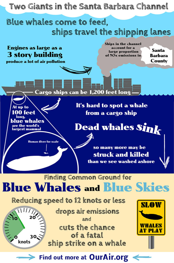 bluewhalesblueskies_V5-slow-whales-at-play-693x1050